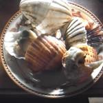 新鮮な貝はゆでて醤油をつけて食べるのが一番!
