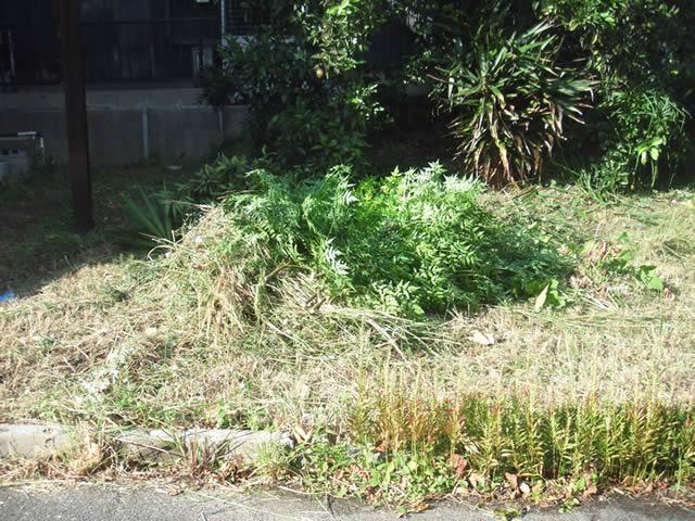 家の庭-草刈り後(2013/10/26)