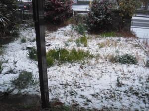 家の庭(2014/2/8 AM10時頃)雪が降っております