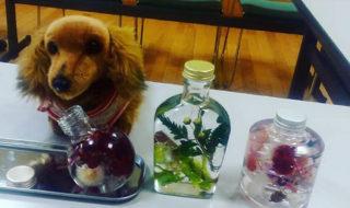 ハーバリウム3種類(ネコ瓶、ウイスキー瓶、スタッキングボトル)