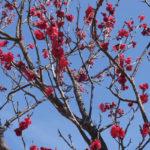 南公園の梅林「この色が一番好き(2019/3/2)」