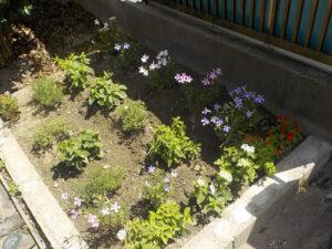 家の庭の花壇(2021/7/17)