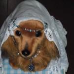 プロフィール画像「ワンちゃん-お姫様になった気分」