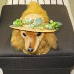 プロフィール画像「ワンちゃん麦わら帽子-緑」