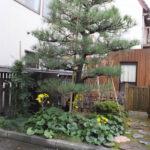 金沢 東茶屋街へ 町屋の庭(2018/12/8)