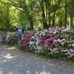 吹上公園のつつじ(2017/4/28)