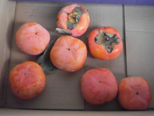 家の庭「柿」を収穫(13/11/20)