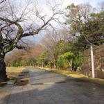 金沢城公園 広場の道(2018/12/8)