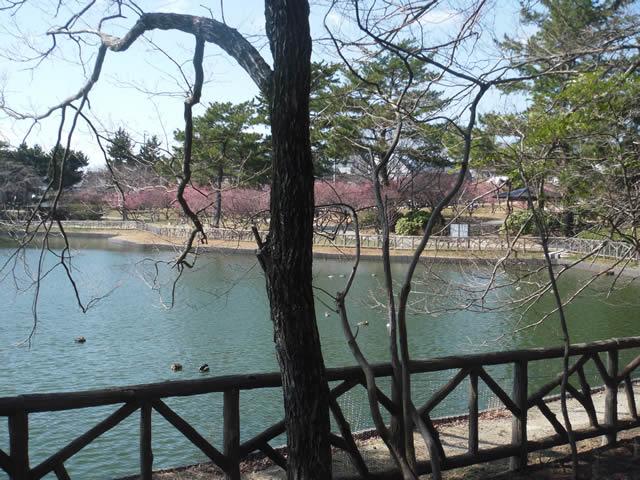 南公園「梅林」(2014/3/15)