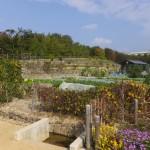 愛・地球博記念公園「緑化フェア(2015/10/24)」