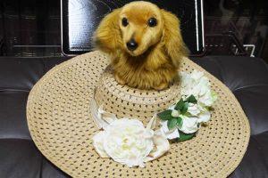 夏の帽子飾り の上にわんこ