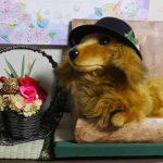 わんこの部屋「お仕事用の格好?(2017/6/20)」