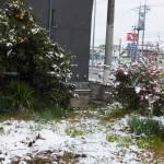 家の庭「今日も雪が降っています(2015/1/2 AM10時頃)」