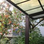 家の庭「柿の木(2015/10/21)」