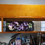 部屋の模様替え-後「木製ロフトベッドの本棚部分(2016/7/16)」