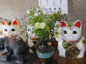 水谷先生から頂いた花々(生花) 2016/7/30