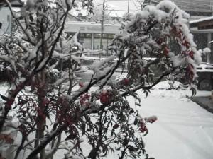雪(2014/2/14 AM7:30頃)