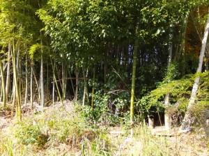 レスパ裏側の道の林(一部竹林?) 2014/12/25