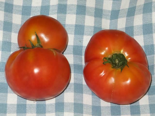 ひょうたん型トマト
